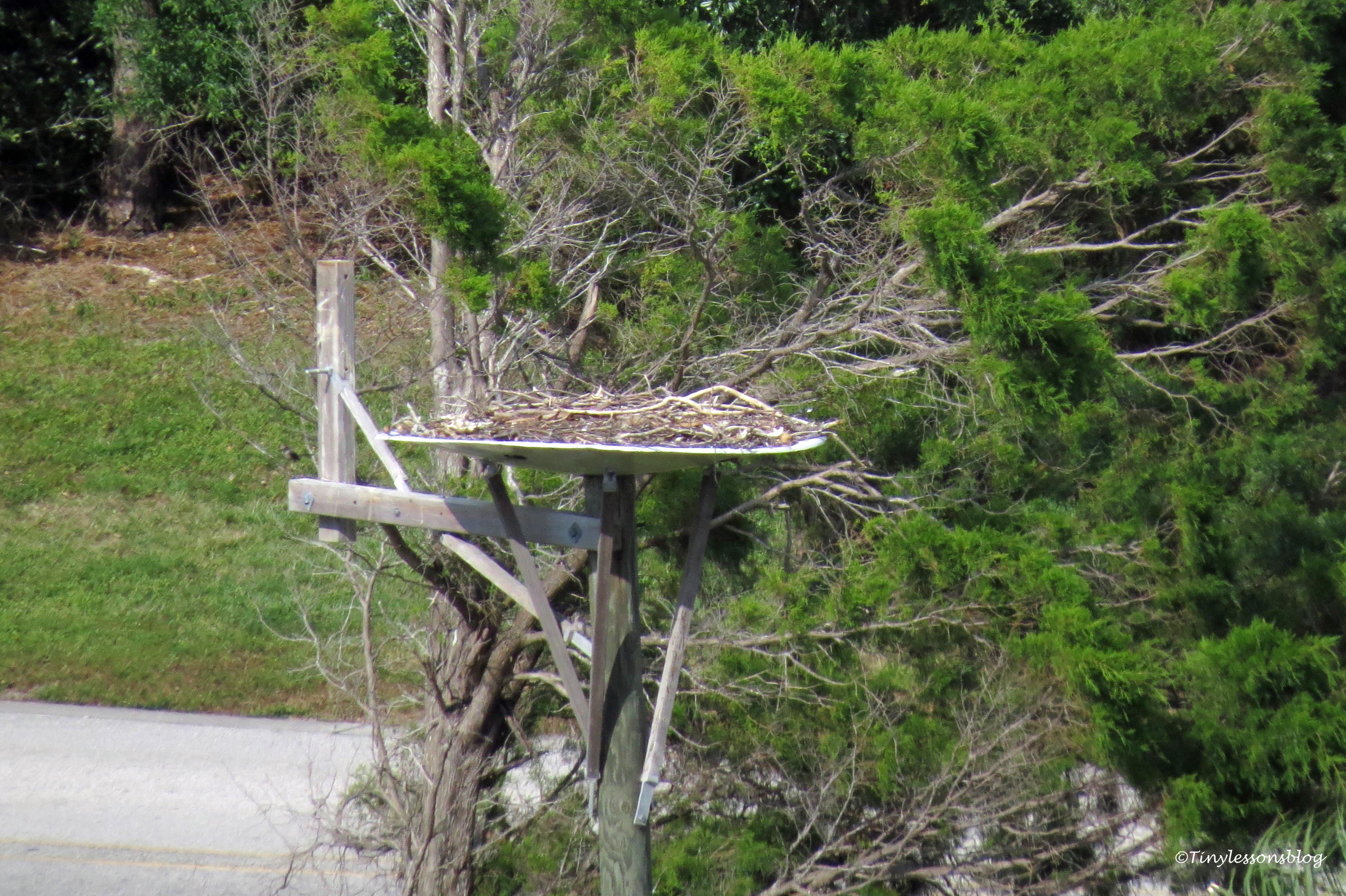 empty osprey nest ud163