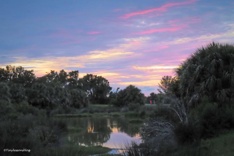 salt marsh sunset 6 15 UD162