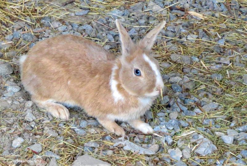 wild rabbit karlberg ud164