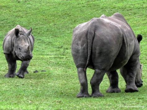 baby rhino and mama ud170