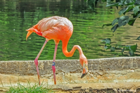flamingo UD170