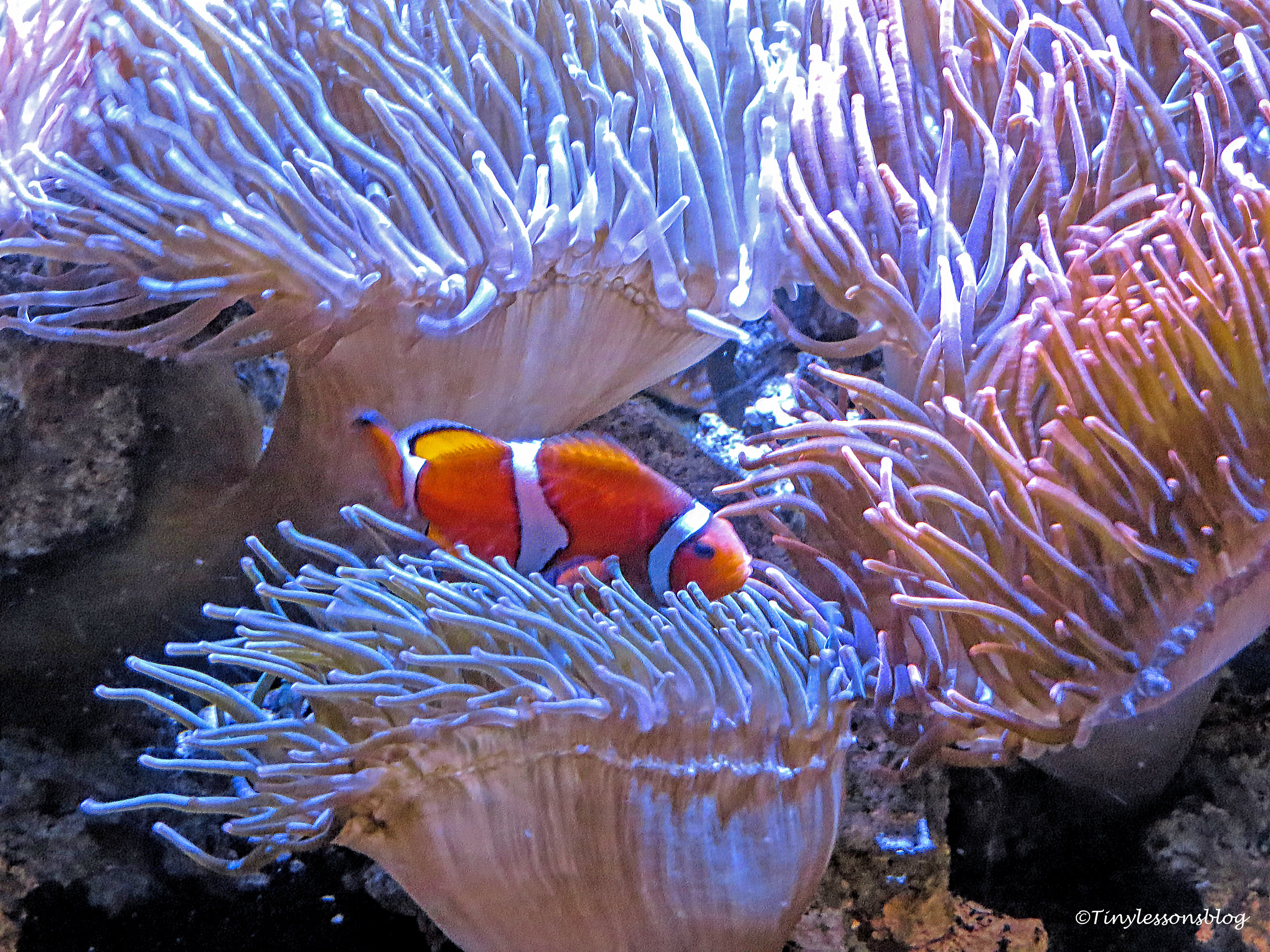 florida aquarium ud170