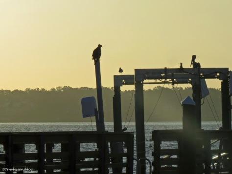 mama osprey at sailing center ud170