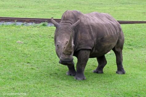 rhino ud170