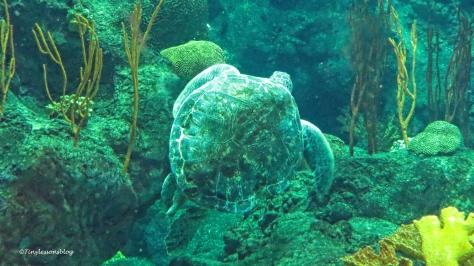 sea turtle 16x9 ud170