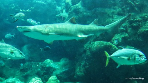shark FL aquarium ud170