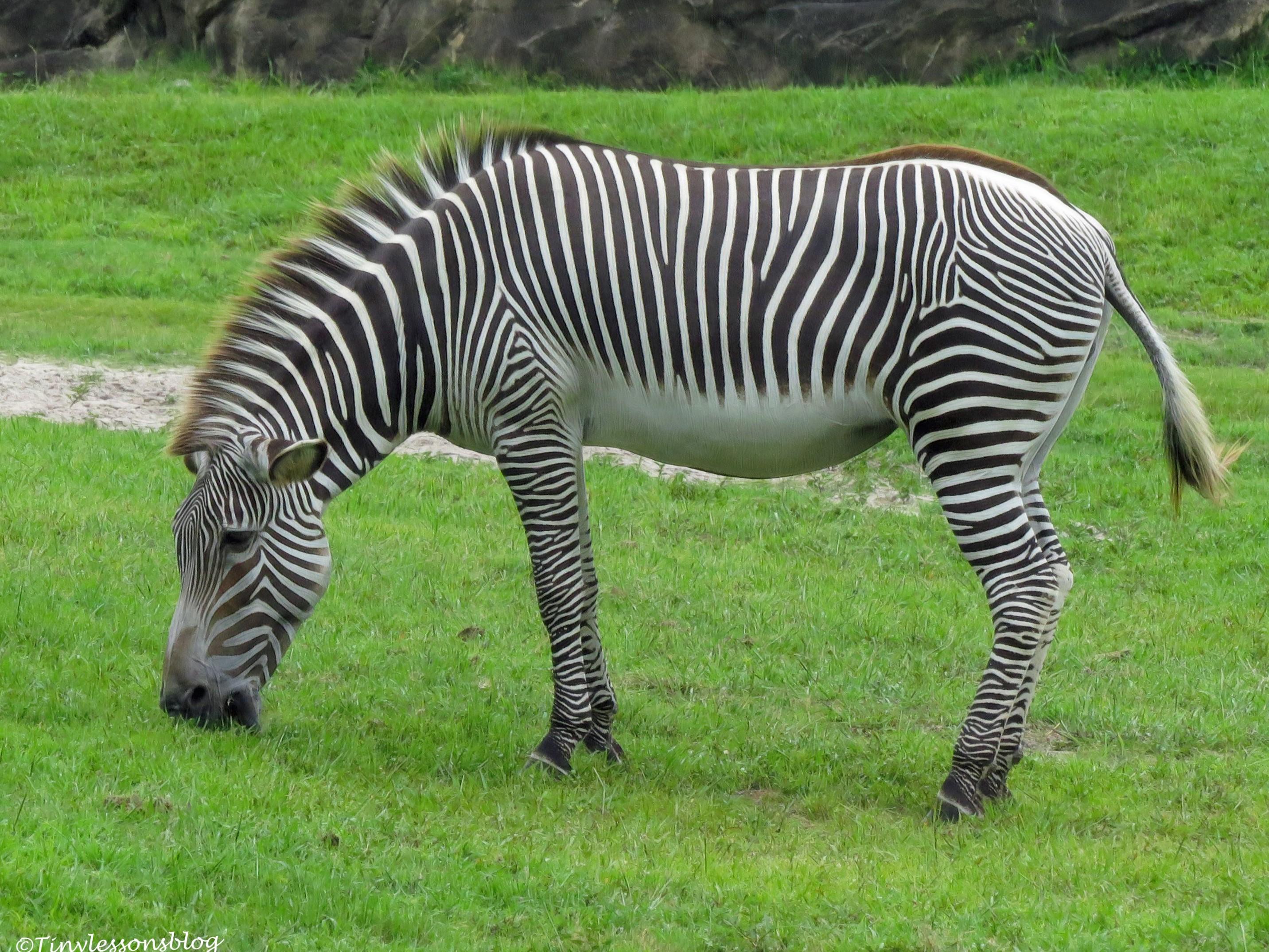 zebra ud170