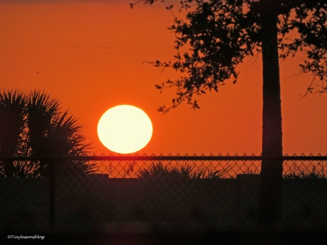 dog park sunset ud171