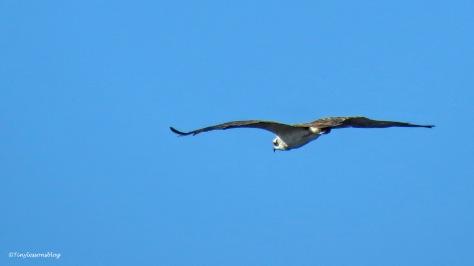 osprey at taylor park ud171