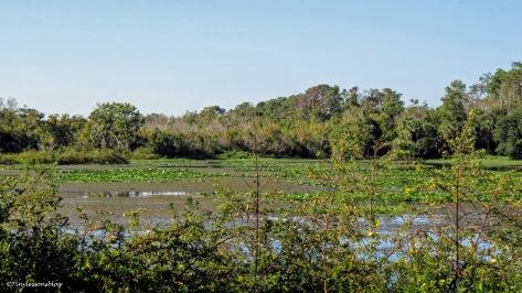 Part of lake at Taylor Park ud172