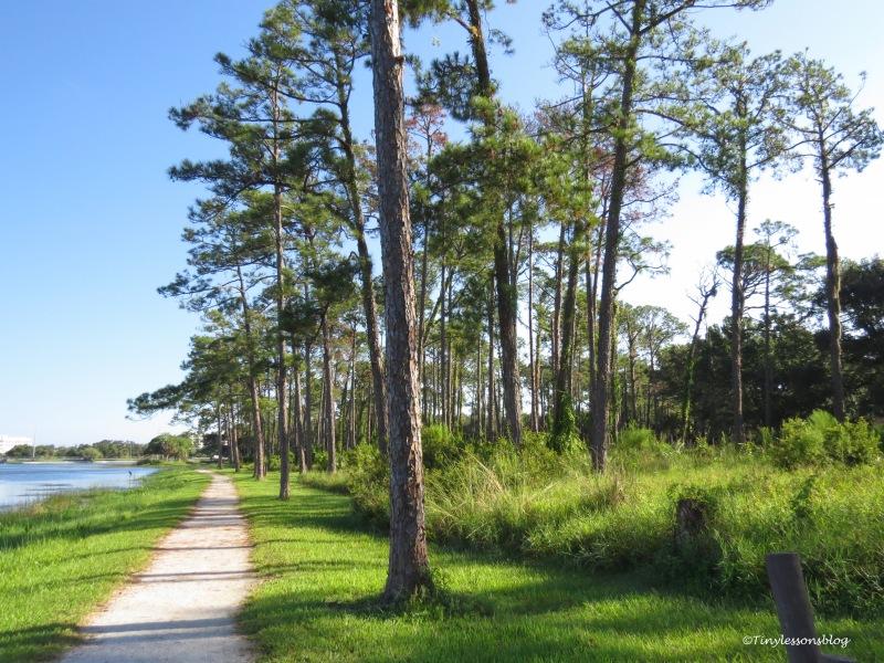 Taylor Park trail ud171